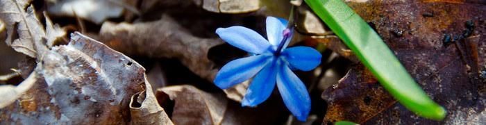 blue-flower.jpg - 37.76 kB